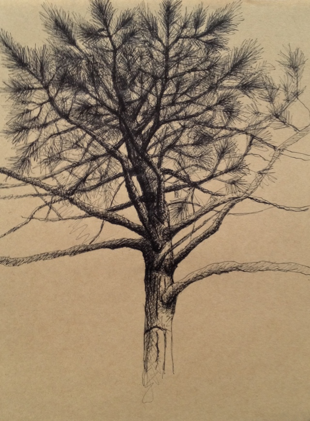 Tree,Late Afternoon, San Jose, California, June 2017,19.5 x 27cm, Ink on Brown Paper, June:17, by David Lloyd